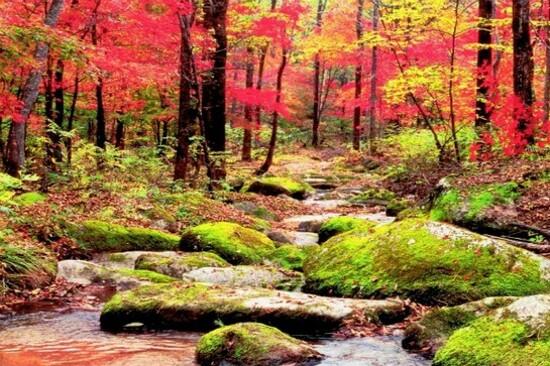 長白山紅葉