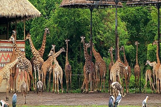 泰國野生動物園
