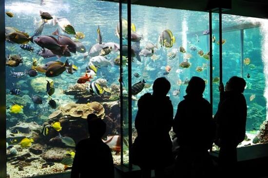 串本海中公園~水族館