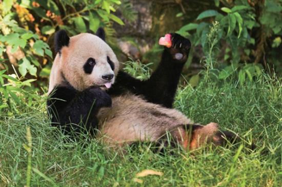 重慶動物園(觀國寶熊貓)