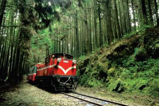 阿里山小火車穿梭森林