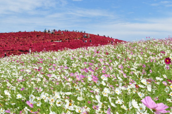 Hitachi海濱花園
