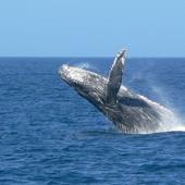 【沖繩那霸賞鯨】 沖繩自由行套票5-31天