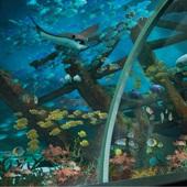 【新加坡環球影城™  X  S.E.A.海洋館™ 】│ 新加坡自由行套票3-31天