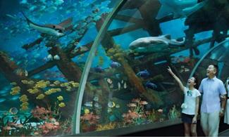 【新加坡環球影城™  X  S.E.A.海洋館™ 】雙景點,雙倍開心!│ 新加坡自由行套票3-31天