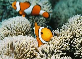 【浮潛體驗一日遊】沖繩自由行套票3-31天
