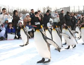 【旭山動物園】最受歡迎的企鵝行走表演│包pocket wifi租借服務│札幌自由行套票3-31天