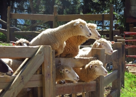【清境青青草原+風味午餐】慢活清境,在青青草地上數綿羊!│台中自由行套票3-31天