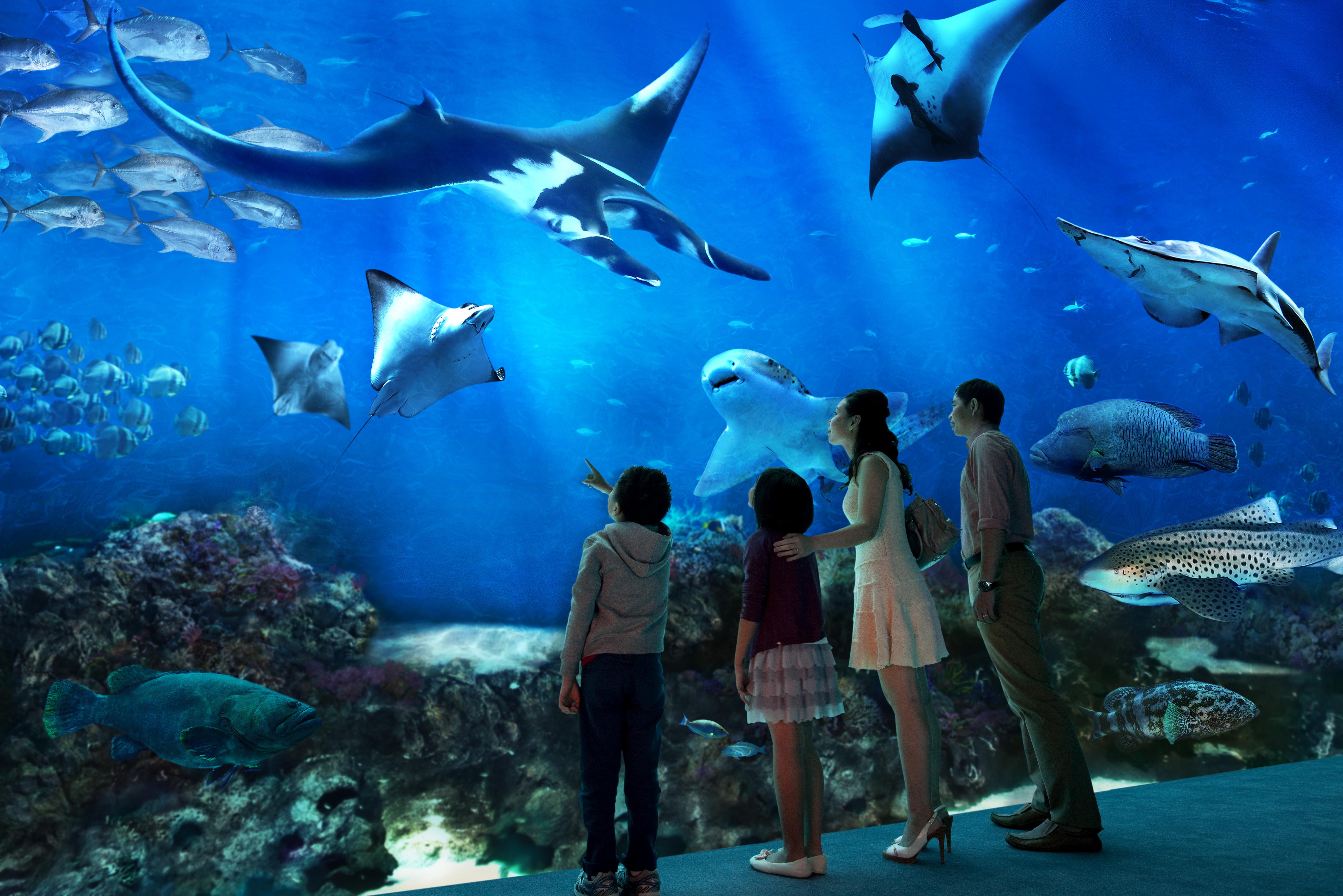 【聖淘沙名勝世界 - S.E.A. 海洋館】新加坡自由行套票3-31天
