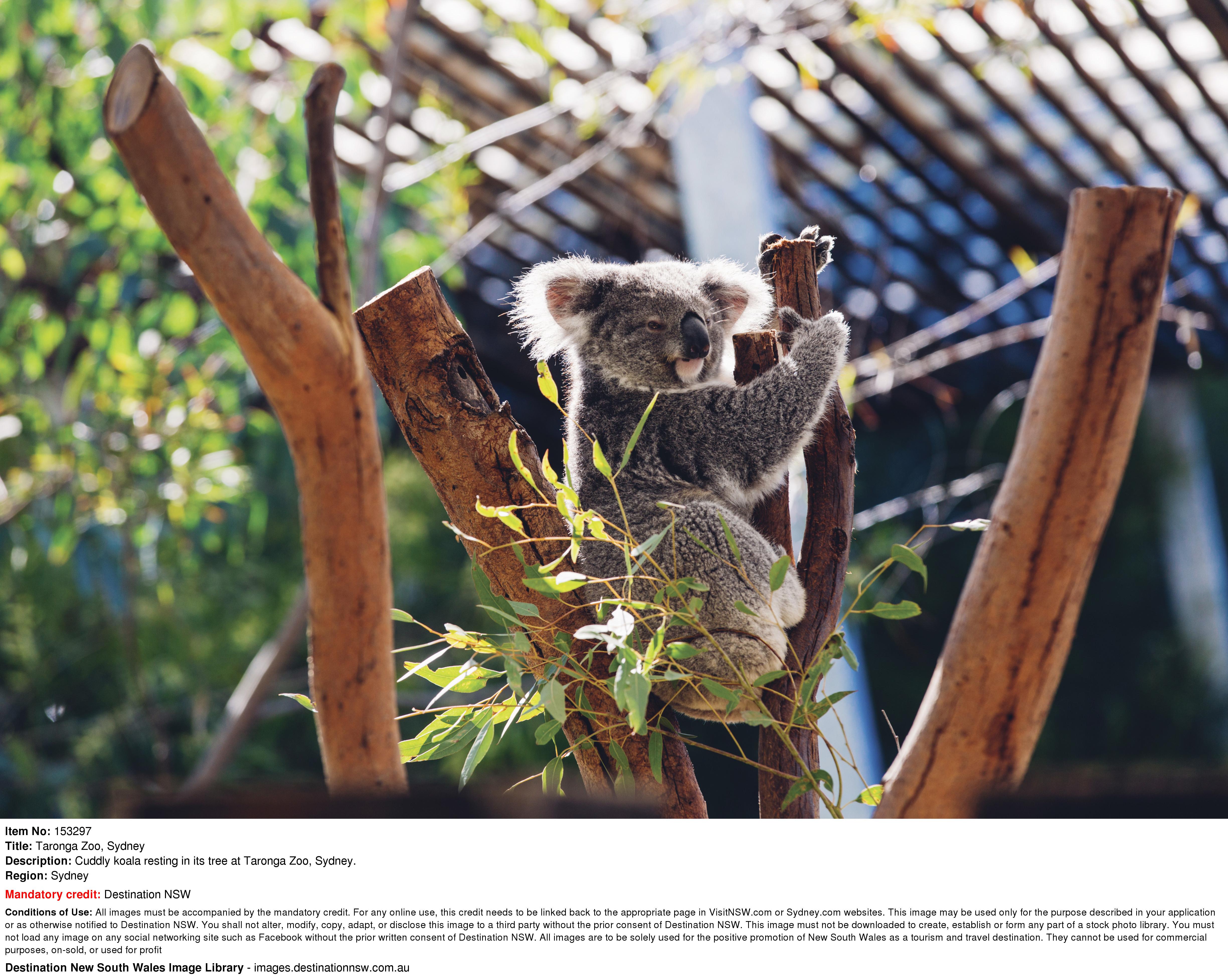 【SYDNEY TARONGA ZOO】擁有約4000隻來自澳洲和世界各地的動物園 | 國泰航空悉尼自由行套票4-31天