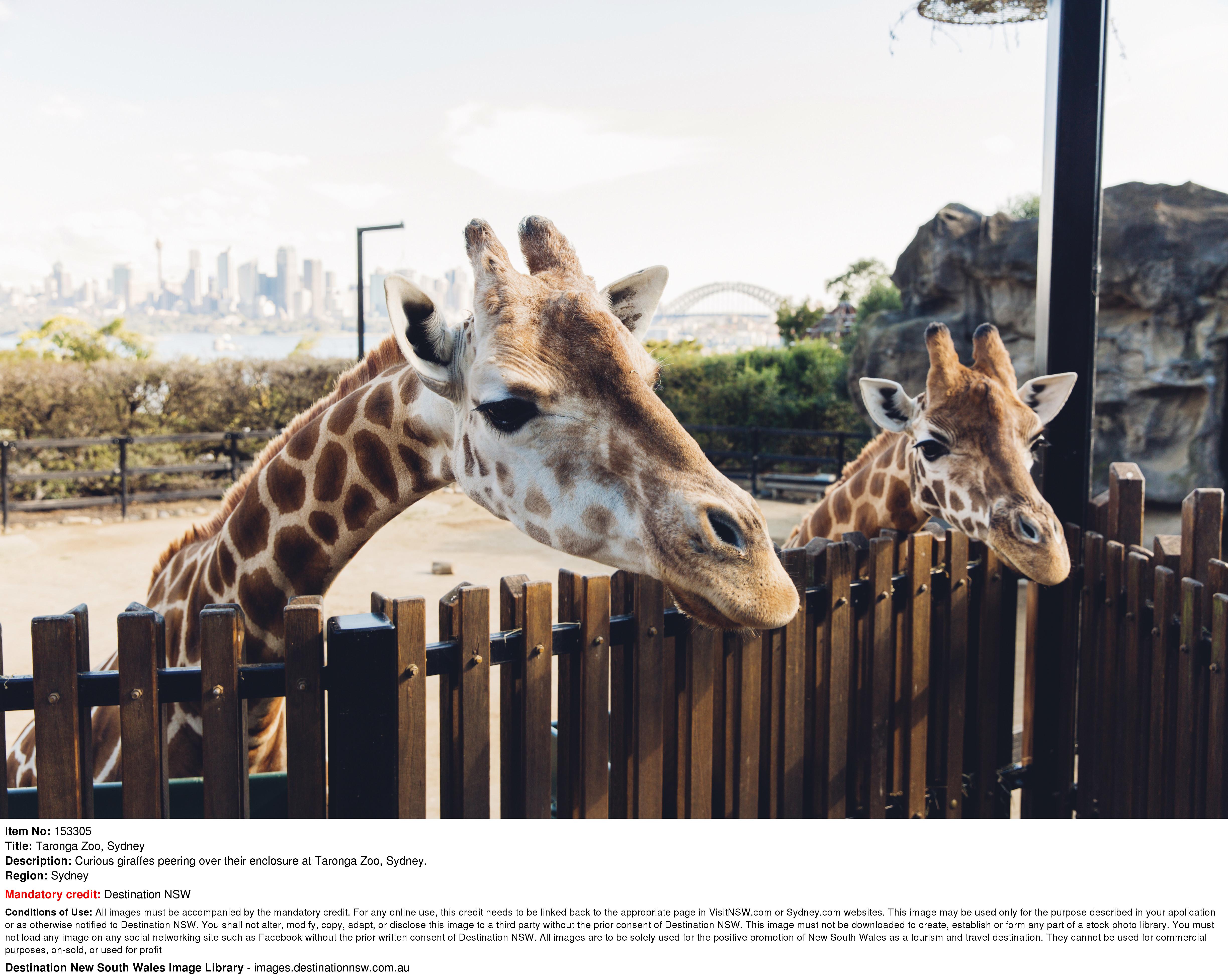 【SYDNEY TARONGA ZOO】擁有約4000隻來自澳洲和世界各地的動物園 | 悉尼自由行套票4-31天