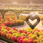 【EVERLAND愛寶樂園】首爾自由行套票6-31天