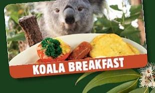 【悉尼野生動物園】和樹熊一齊食早餐 | 悉尼自由行套票4-31天