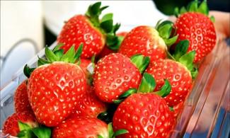 【有機草莓園+Art Valley+香草島樂園晚燈節一天團】愛草莓無限吃│首爾自由行套票3-31天