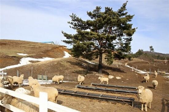 大關嶺牧場