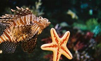 【墨爾本水族館】多達10,000種海洋生物 | 國泰航空墨爾本自由行套票4-31天