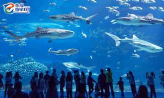 【雙人優惠】鯨鯊到底有幾大?!│長隆主題酒店+門票│金光飛航│珠海自由行套票2-7天~『來回澳門氹仔碼頭 』