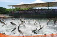 中華一絕~《獨家》千島湖巨網捕魚,欣賞一場蔚為奇觀的捕撈表演