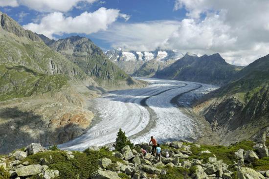 阿萊奇冰川