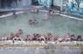 熱帶植物園猴子溫泉浴