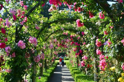 布查花園2