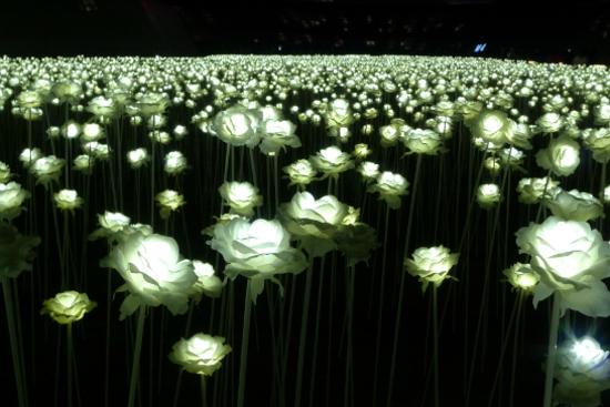 LED花海