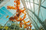 「絢麗迷人的玻璃藝術」奇胡利玻璃藝術園
