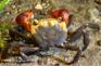 Terra Crab Farm