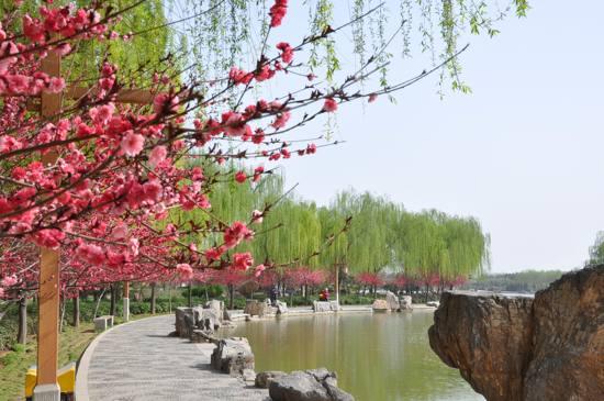 隋唐遺址植物園