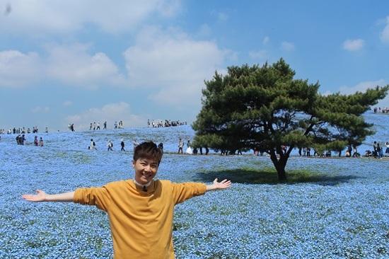 國營常陸海濱公園粉蝶花