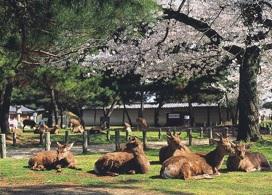 【京都、奈良一天團】大阪自由行套票5-31天