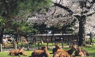 【京都、奈良一天團】歷史名勝之旅│包pocket wifi租借服務│大阪自由行套票3-31天