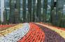 季節限定:4-5月萬石植物園賞多肉植物