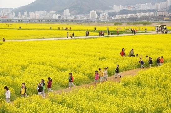 大渚生態公園(賞油菜花)