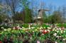 庫肯霍夫花展(4月1日至5月8日出發增遊)