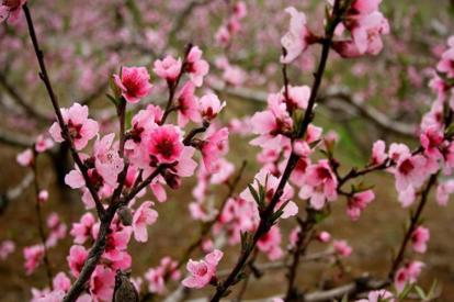 桃花源景區