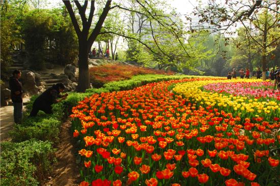 季節限定~4月出發增遊西安興慶宮公園賞花