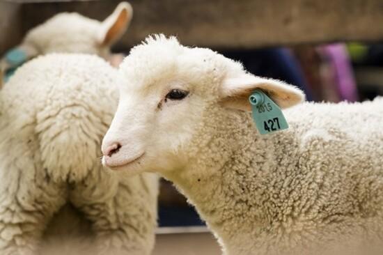 十勝牧羊之家
