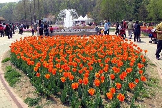 《增遊》富川自然生態公園(賞鬱金香註1) (4月16日至26日出發團隊適用)