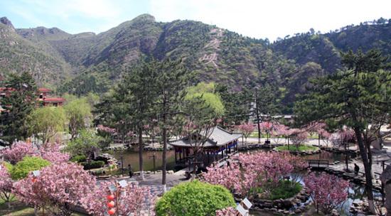 龍慶峽- 賞花