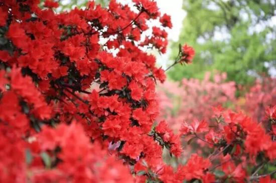 西溪國家濕地公園(花朝節)