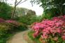 杭州植物園-杜鵑