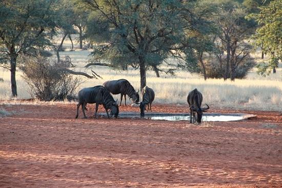 全方位追蹤野生動物