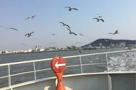 永宗島遊船體驗