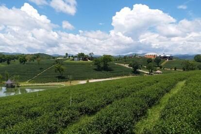 Choui Fong茶園莊