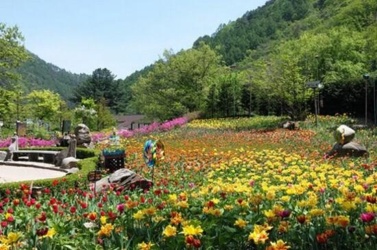 Herb Nara Farm