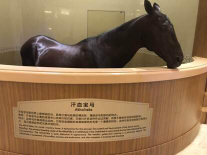 馬文化體驗館