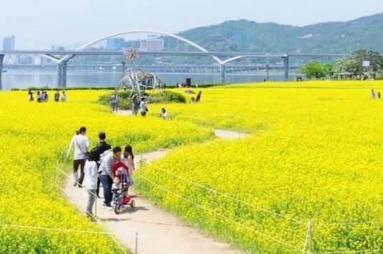 《增遊》京畿道‧九里漢江公園(賞油菜花)