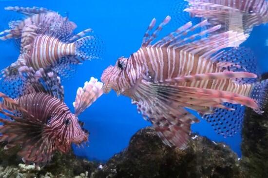 芽莊海洋博物館