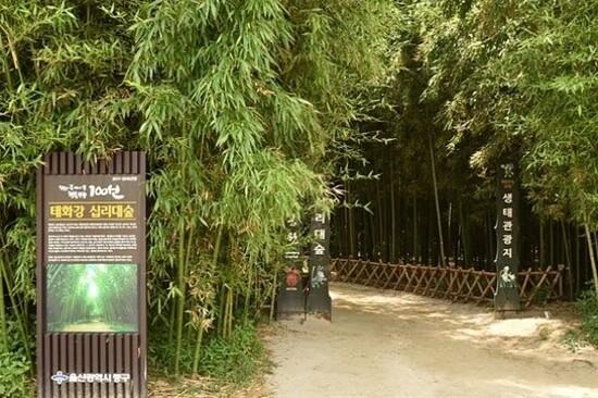 太和江大公園~十里竹林